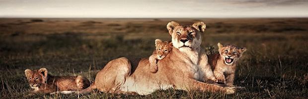 Документальные фильмы про животных и природу  Смотреть