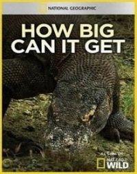 Гиганты мира животных. Самый большой крокодил
